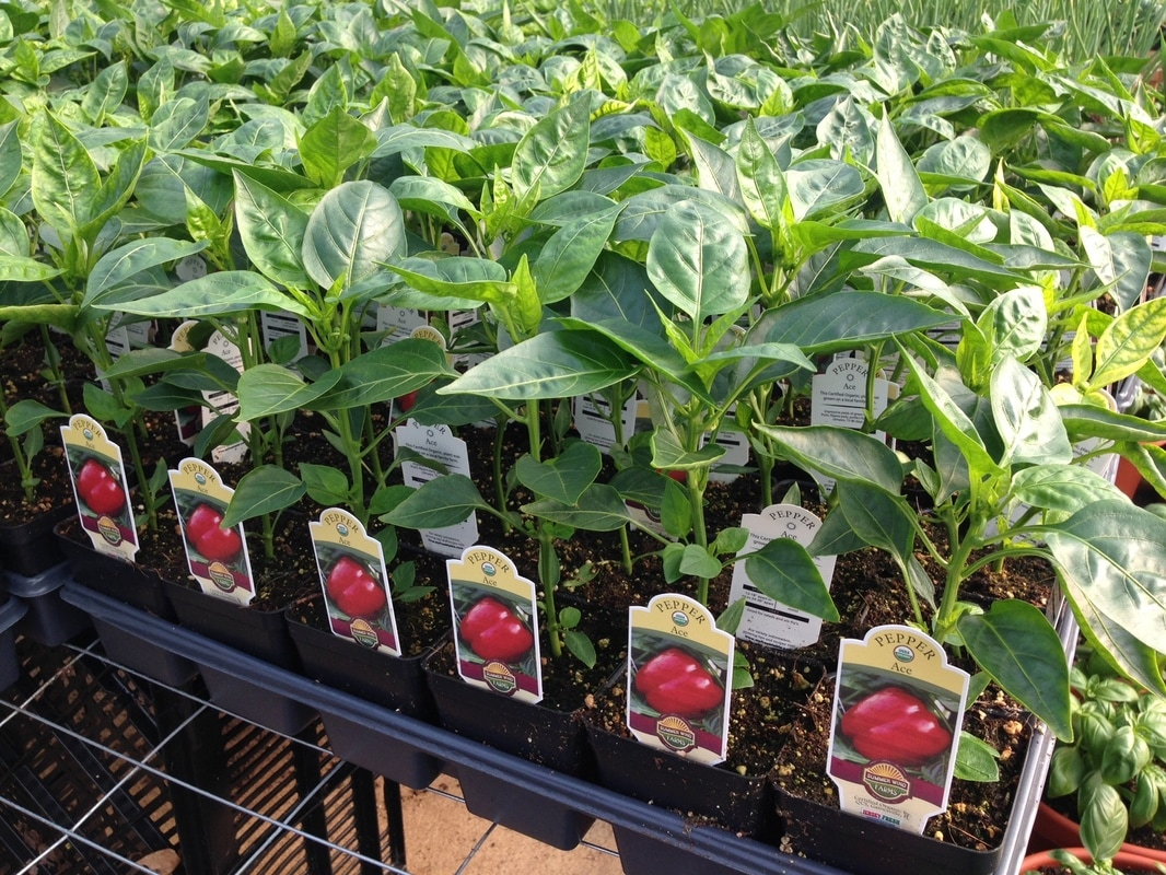 Home food garden - As South Jersey S Top Grower Of Usda Certified Organic Vegetable And Herb Plants We Grow Over 50 Different Items For Your Home Garden Including Over 15